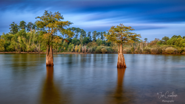 Cypress Trees at Sunrise