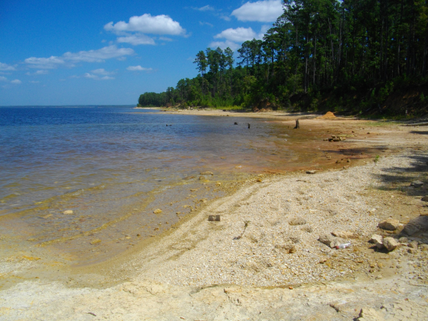 Southside Sam Rayburn Beaches