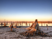 The Stumps of Lake Fork 1