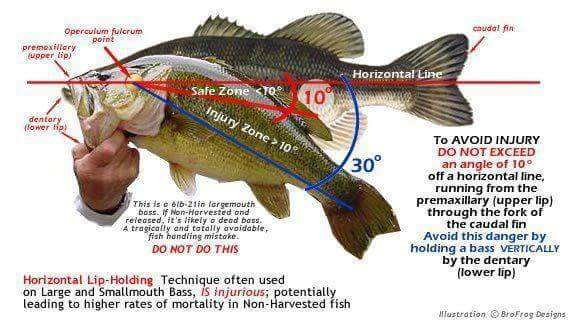 How to handle a lunker bass
