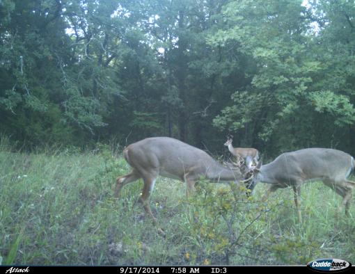 130 Acres Hunters Paradise On Lake Texoma Outside