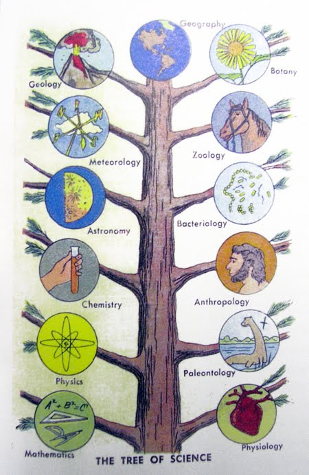 what are the main branches of science