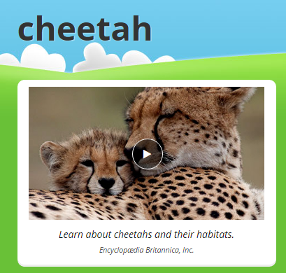 Cheetah - Animal Adaptations - LibGuides at Tabernacle