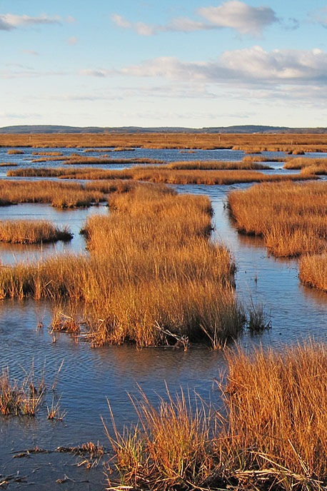 Marsh: Parker River National Wildlife Refuge, MA