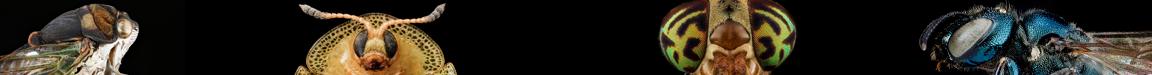 portraits of a leaf hopper, tortoise beetle, horse fly, and jewel wasp.