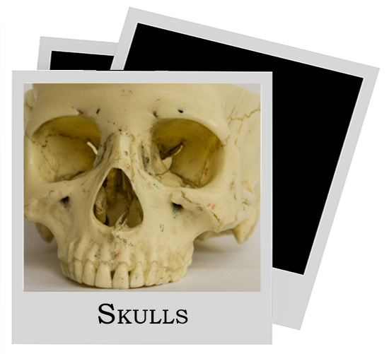 Home Anatomy Models Library Guides At University Of Nevada Reno