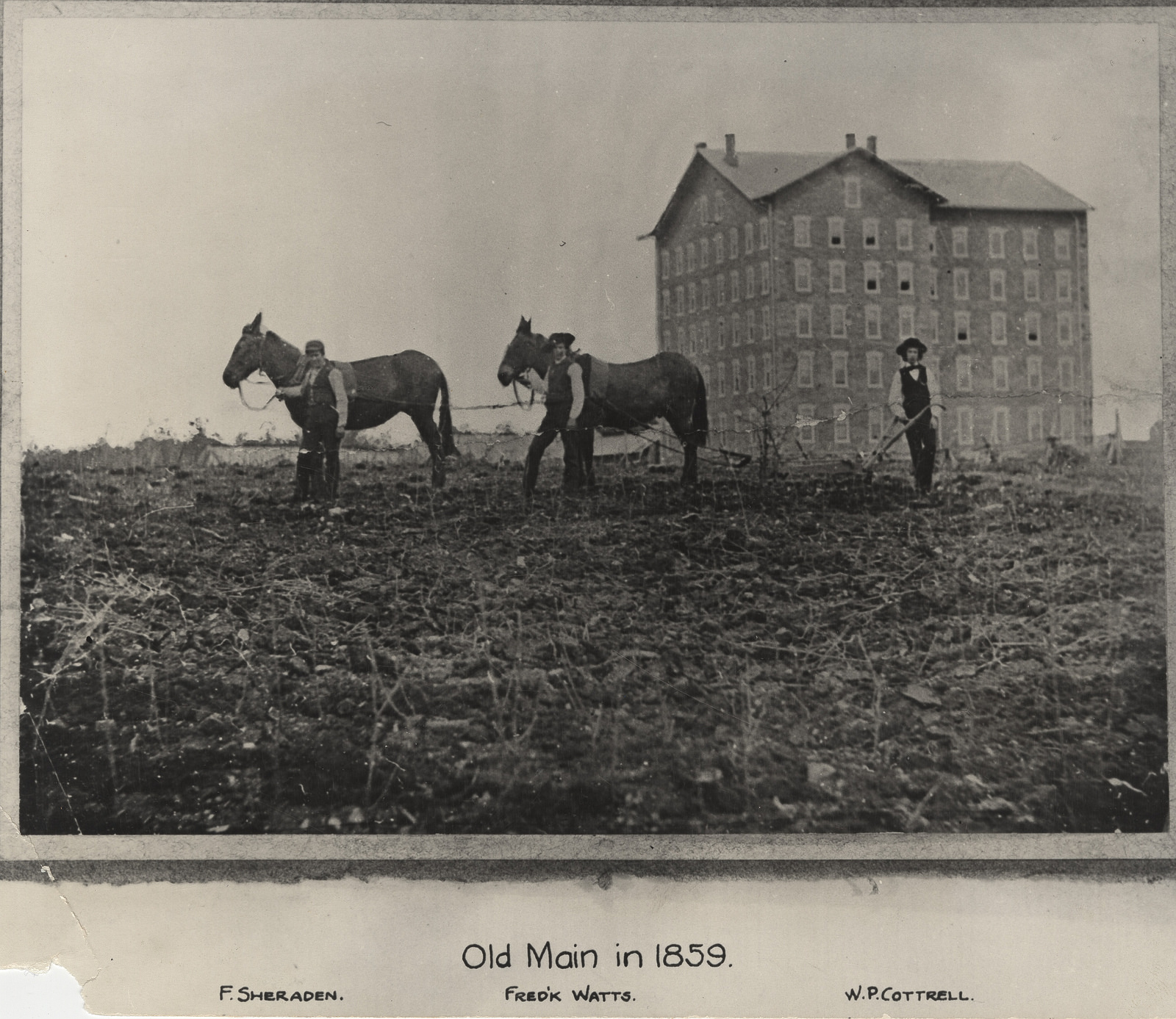 Old Main building in the right background with two mules in front of a plow, being led by two people, and one other person in back of the plow