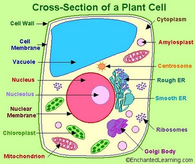 Introduction - Grade 7 - Science - Cells - LibGuides at