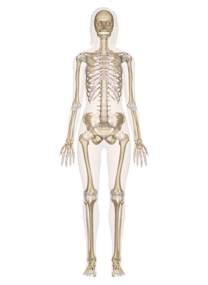Anatomy & Physiology - Science - LibGuides at Eastern Arizona College