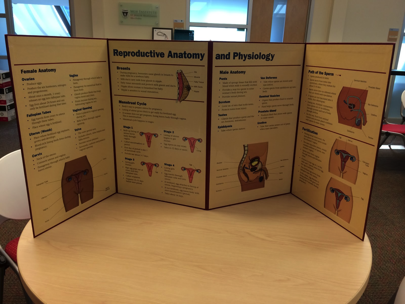 B22 Poster, a 4-fold poster that stands up on its own, showing reproductive anatomy and physiology