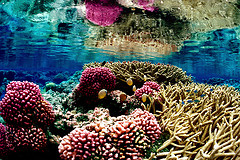 Coral reef and water