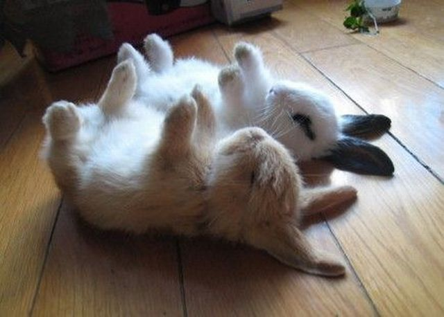 Two bunnies doing yoga