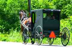 Horse-drawn black Mennonite buggy on a country road