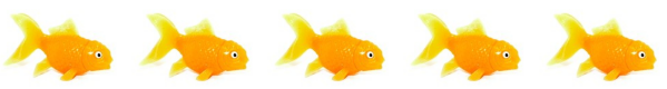 five goldfish
