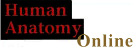 logo for human anatomy online