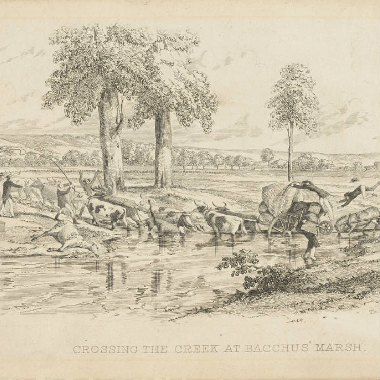 Lithograph, print, Shows a bullock wagon bogged in the creek up to its axle, while men with whips urge the team on to greater efforts. A dead horse lies on the edge of the water, and on the right a man has been thrown out of his dray into the water when his horse stumbled