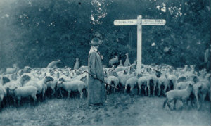 Shepherdess, Illustrated war news, 5 July 1916, page 35