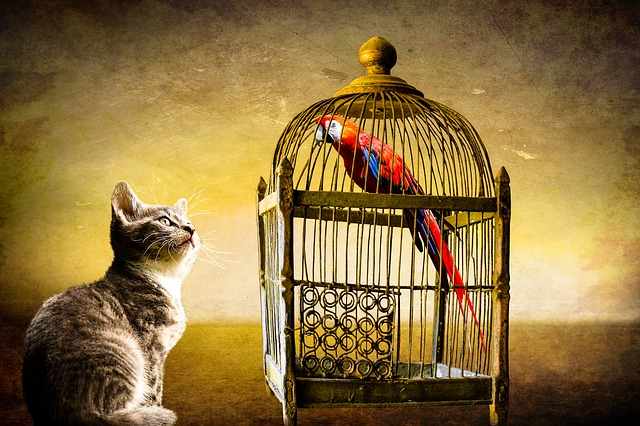 Image of a cat watching a parrot in a cage.