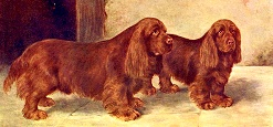 The Sussex Spaniels Champion Rosehill Rock and Rosehill Rag by Bridford Bibelot from the book, The New Book of the Dog