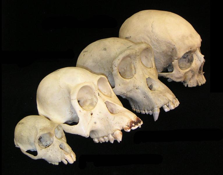 assortment of skulls