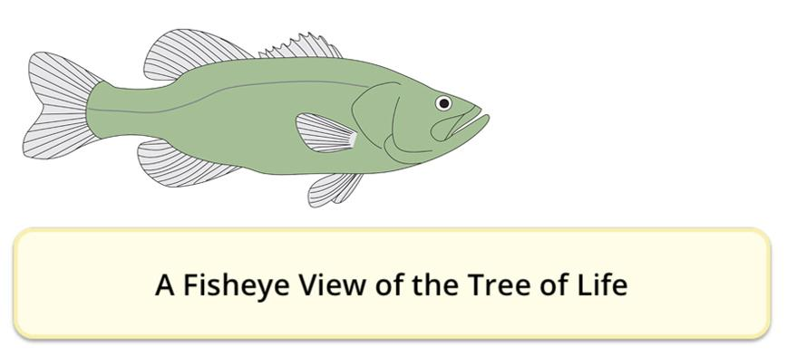 Link to http://evolution.berkeley.edu/evolibrary/article/fishtree_01