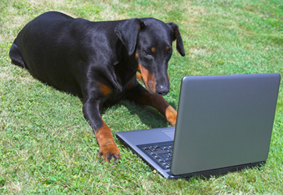 Dog Reading from Laptop