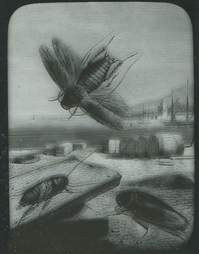 Old engraving of roaches by a harbor