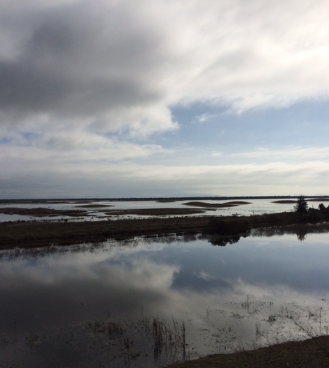 Sears Point Salt Marsh Restoration