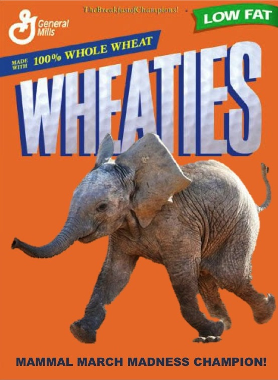 Wheaties box cover featuring 2013 champion, the elephant