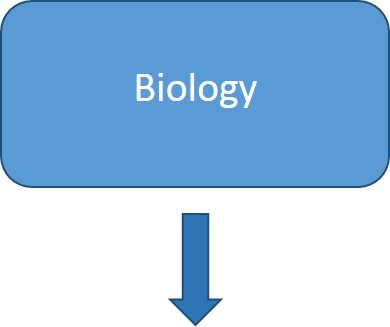 Example Biology
