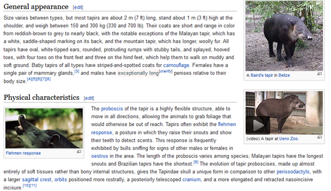 Wikipedia tapir article