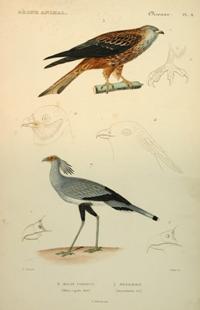 Regne animal. Oiseaux La creación. Historia natural