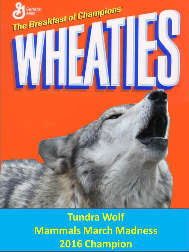 A wheaties box cover with the Tundra Wolf, 2016MMM champion