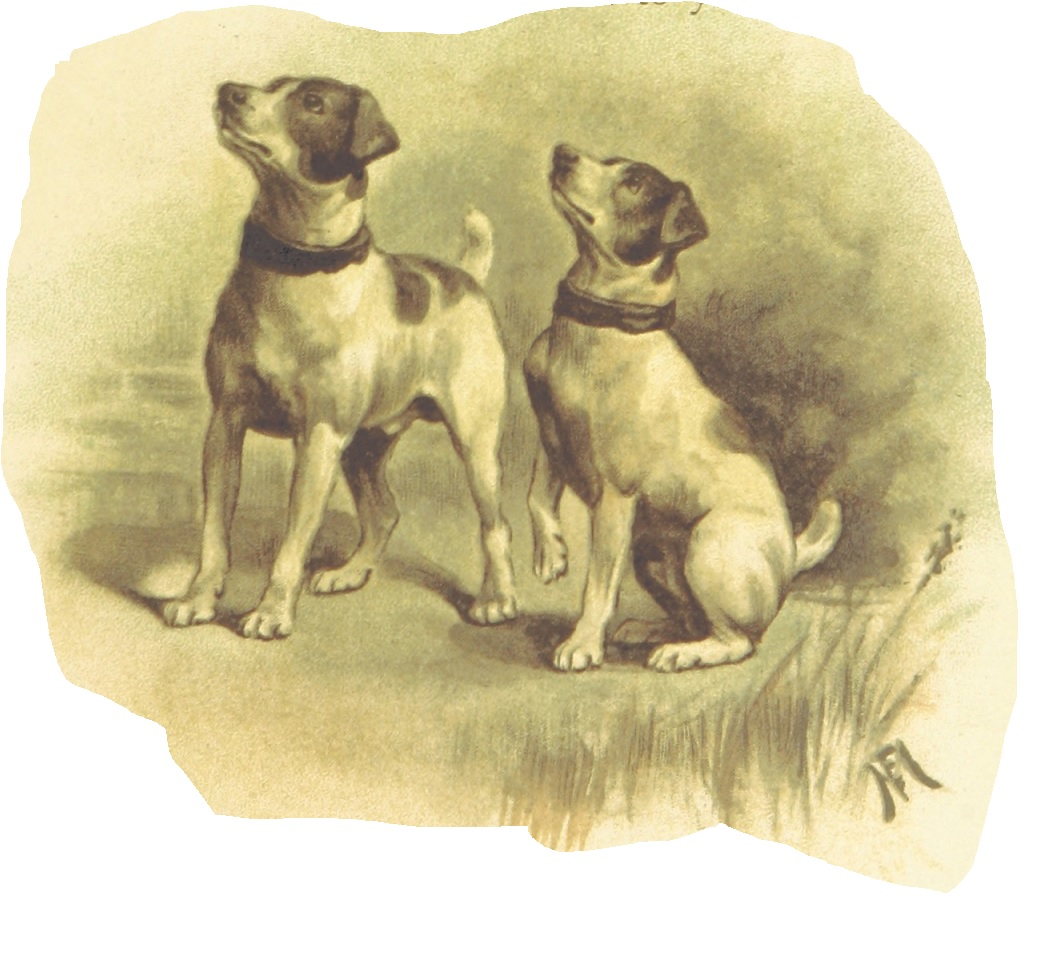 drawing of 2 terriers looking up