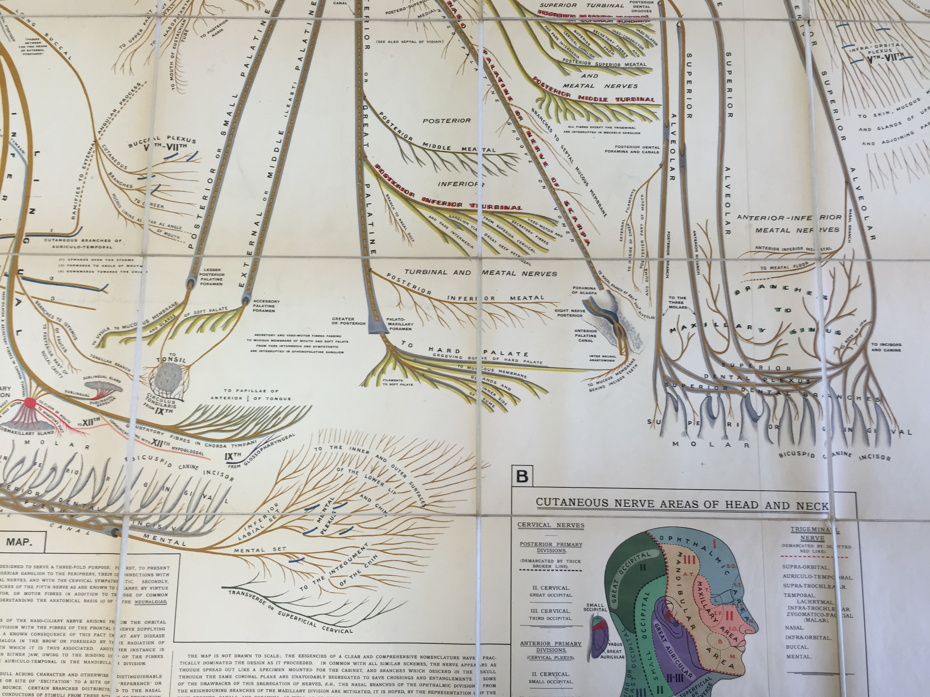Image of facial nerve map