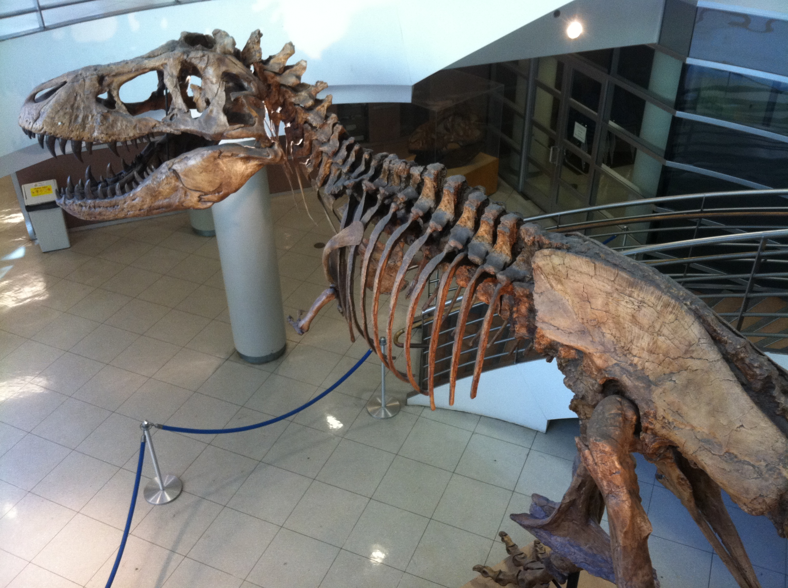 Dinosaur in VLSB - click for library home page