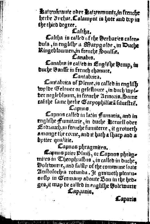"Screenshot of the page defining ""canabis"" from ""The Names of Herbes"""
