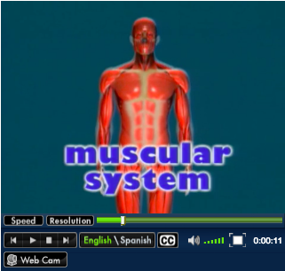 Muscular System - Human Body Systems - LibGuides at ...