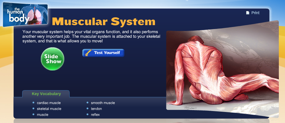 Muscular System Human Body Systems Libguides At Washington