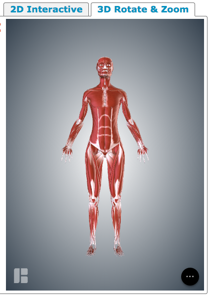 muscular system - human body systems - libguides at washington, Muscles