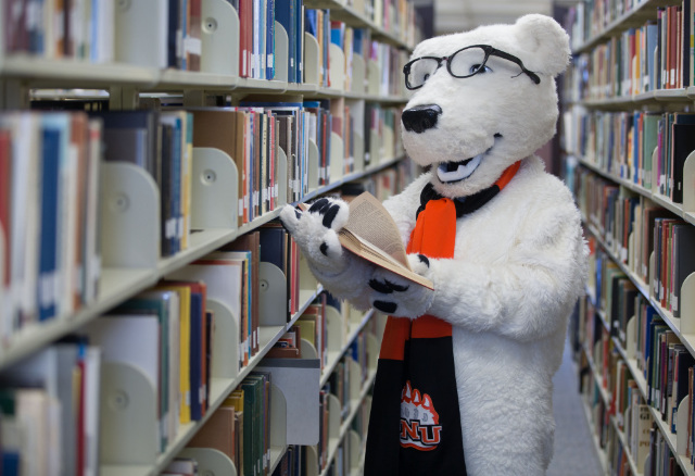Photo courtesy of ONU Communications and Marketing, Trevor Jones, Klondike the Polar Bear reading a book in the library stacks.