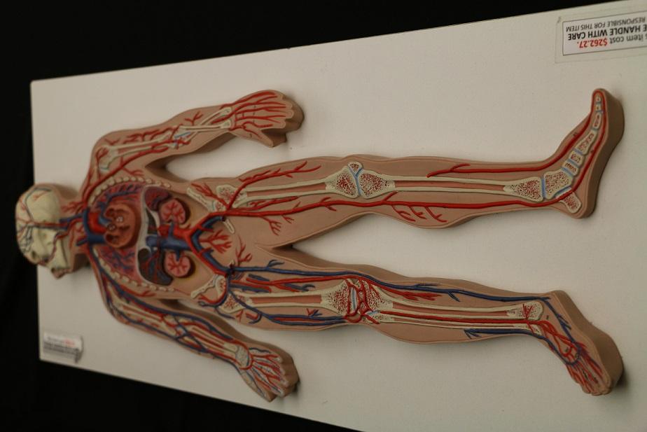 Biol 224 Lab 4 - Body Parts - LibGuides at University of