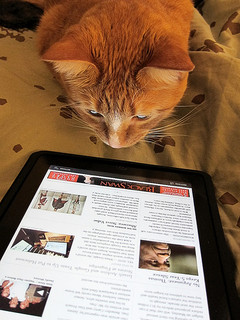 cat reading on an ipad