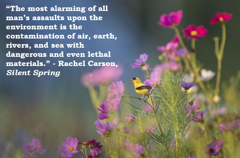 Silent Spring And Its Aftermath Rachel Carson LibGuides At Mesmerizing Rachel Carson Quotes