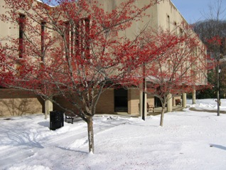 photo of the exterior of the library in the winter