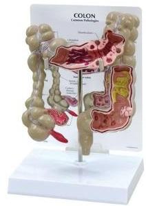 Wisconsin anatomy videos