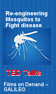 Re-Engineering Mosquitos to Fight Disease