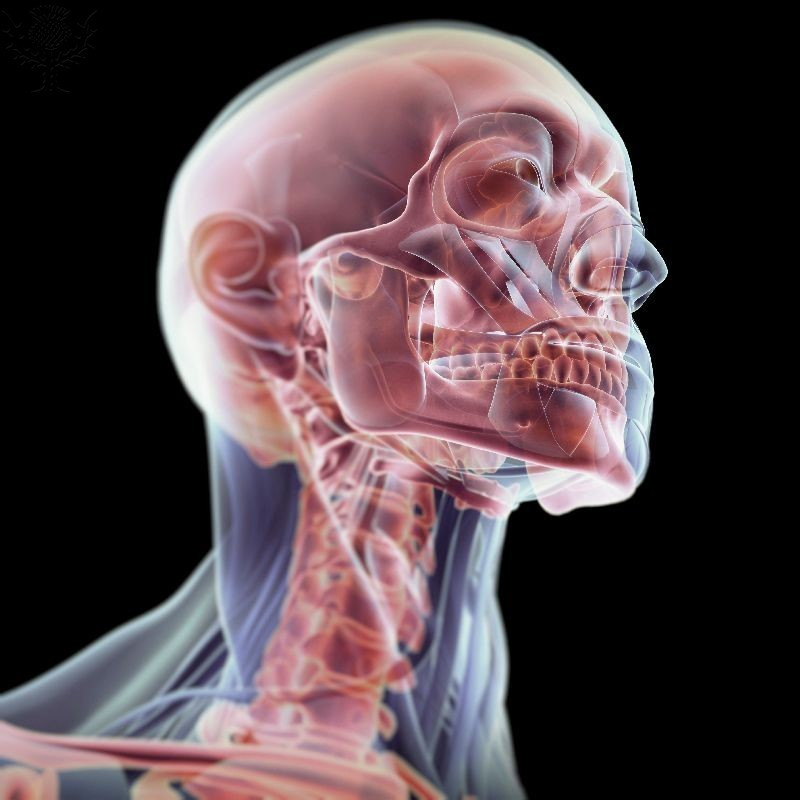 Transparent human head
