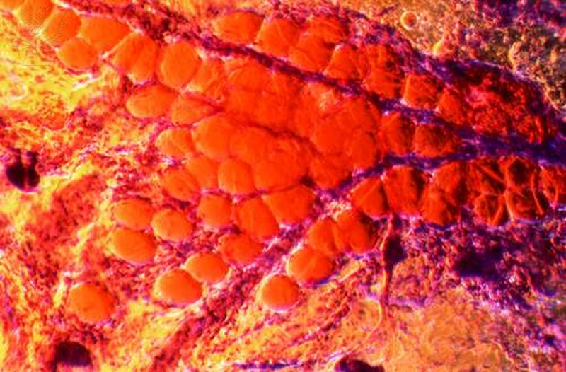 Close-up of skin cell