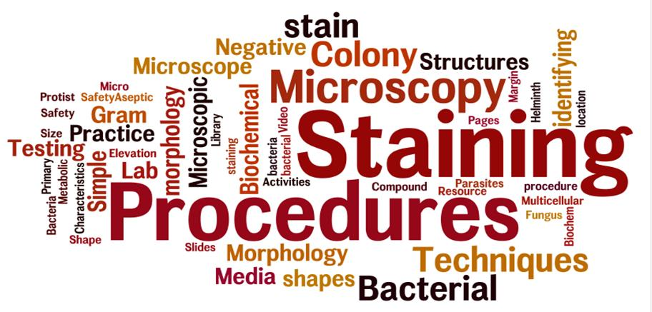 Word cloud including words like microscopy, colony, negative, microscope, gram, stain, structures, identifying, ect.
